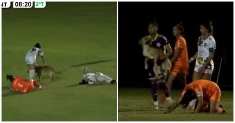 И даже карточку не дали: собака выбежала на поле и сбила с ног футболистку