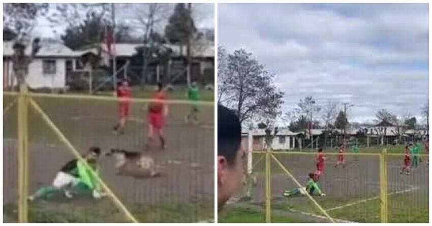 В Чили собака выбежала на поле и забила гол