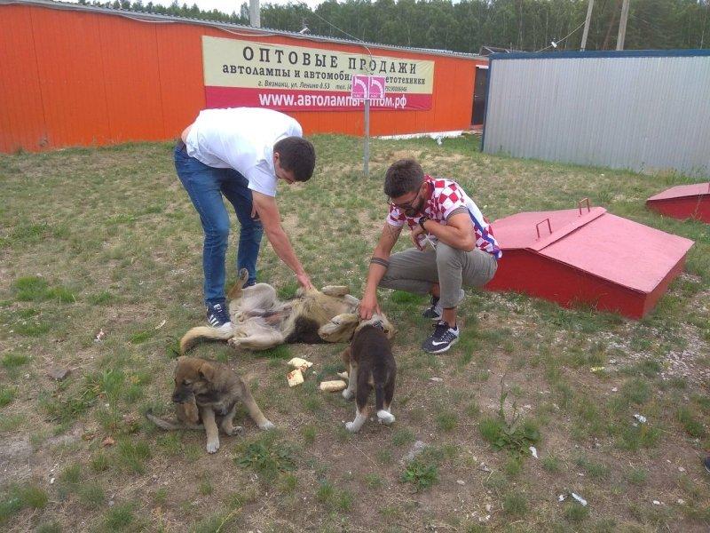 Хорваты подружились с бродячими собаками. Ну кто их еще покормит!