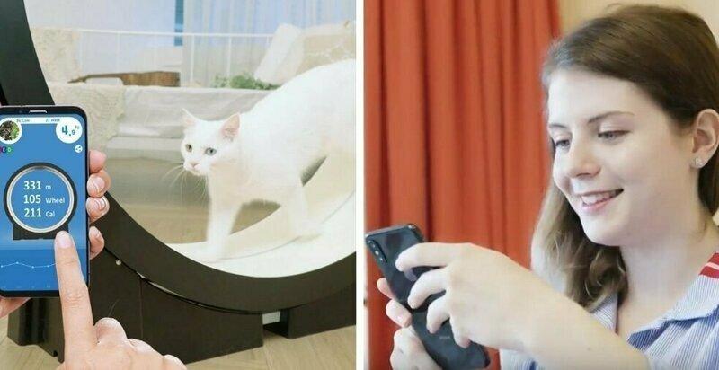 Корейцы придумали умный тренажёр для толстых котов в мире, животные, забавно, коты, похудение, спорт, тренажёр