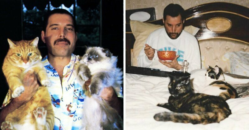 Фредди с котами знаменитости, кино, спорт, фото, фотографии, шоубизнес, эстрада