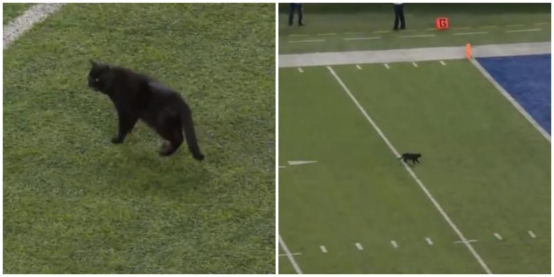 Чёрный кот выскочил на поле прямо во время матча по футболу