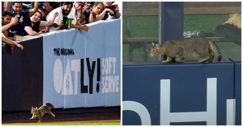 Кот прорвался на стадион и стал главным событием матча