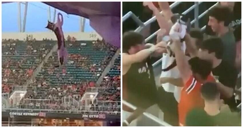 Болельщики спасли сорвавшегося с огромной высоты кота на стадионе в Майами