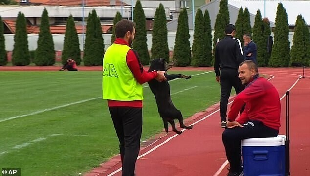 Собака сорвала футбольный матч премьер-лиги в Боснии